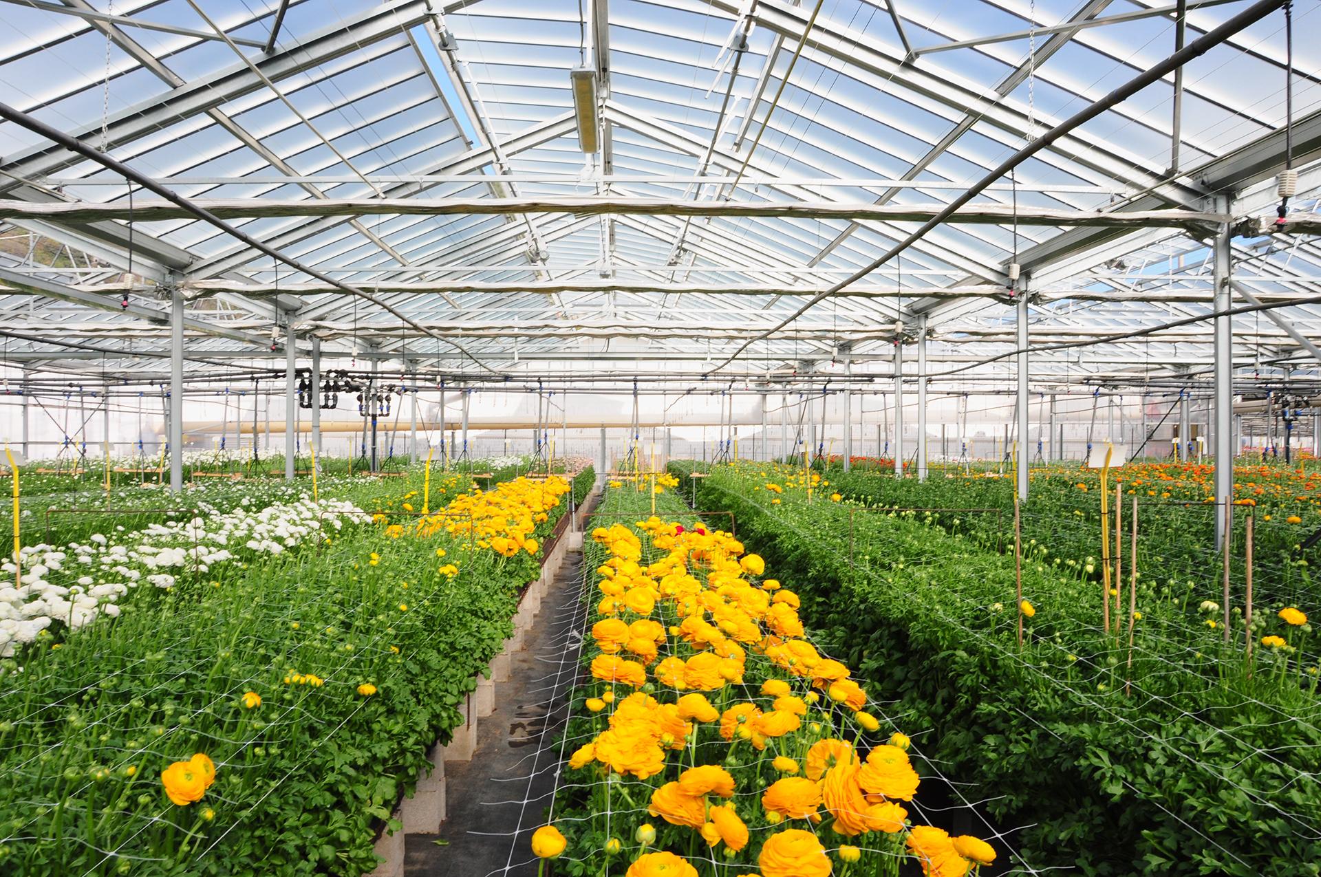 Realizzazione serra per l'azienda agricola Biancheri
